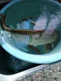 钓鲤鱼2.jpg